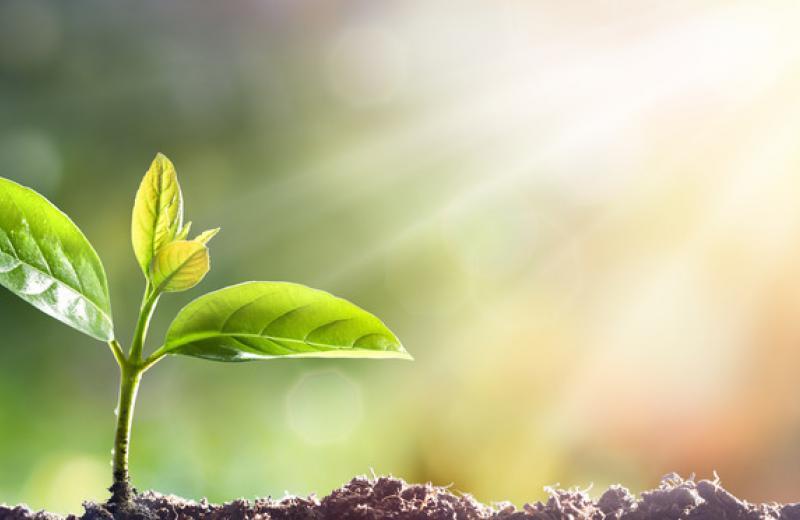 Нові правила ввезення в ЄС продуктів рослинного походження