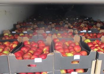 З'явилася можливість доставляти харчові продукти до Китаю Новим Шовковим шляхом