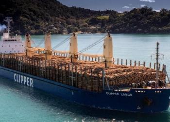 Ланцюги постачання деревини можуть змінитися через заборону на експорт, яку запроваджує Росія