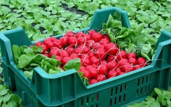 Удобства использования пластиковой тары для сезонных фруктов и овощей